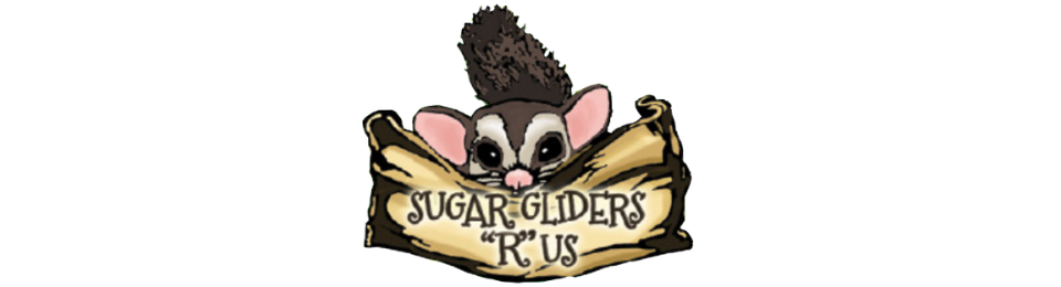 Sugar Gliders *R* Us